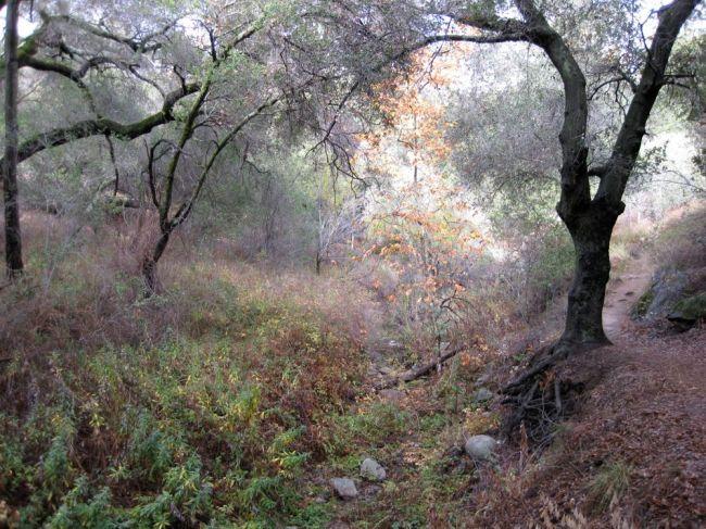 Oak grove in Fall