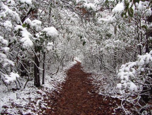 Appalachian Trail | Georgia, USA, 2011