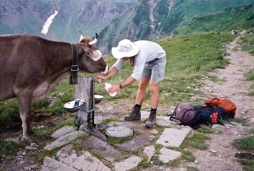 Alpine Pass Cow