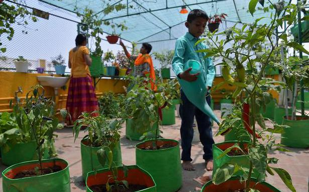 Tips on how to grow your own vegetables on a terrace