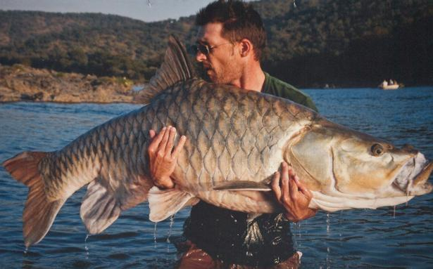 Save the mighty mahseer  The Hindu