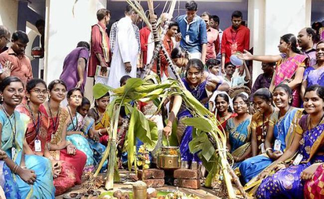 Pongal Celebrated The Hindu
