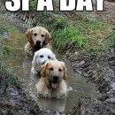 dogs-bathing-in-the-mud-spa-day-funny-picture