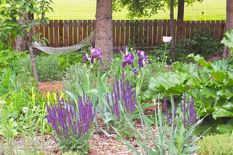How to Create an Amazing Homestead Garden - The Hip Homestead