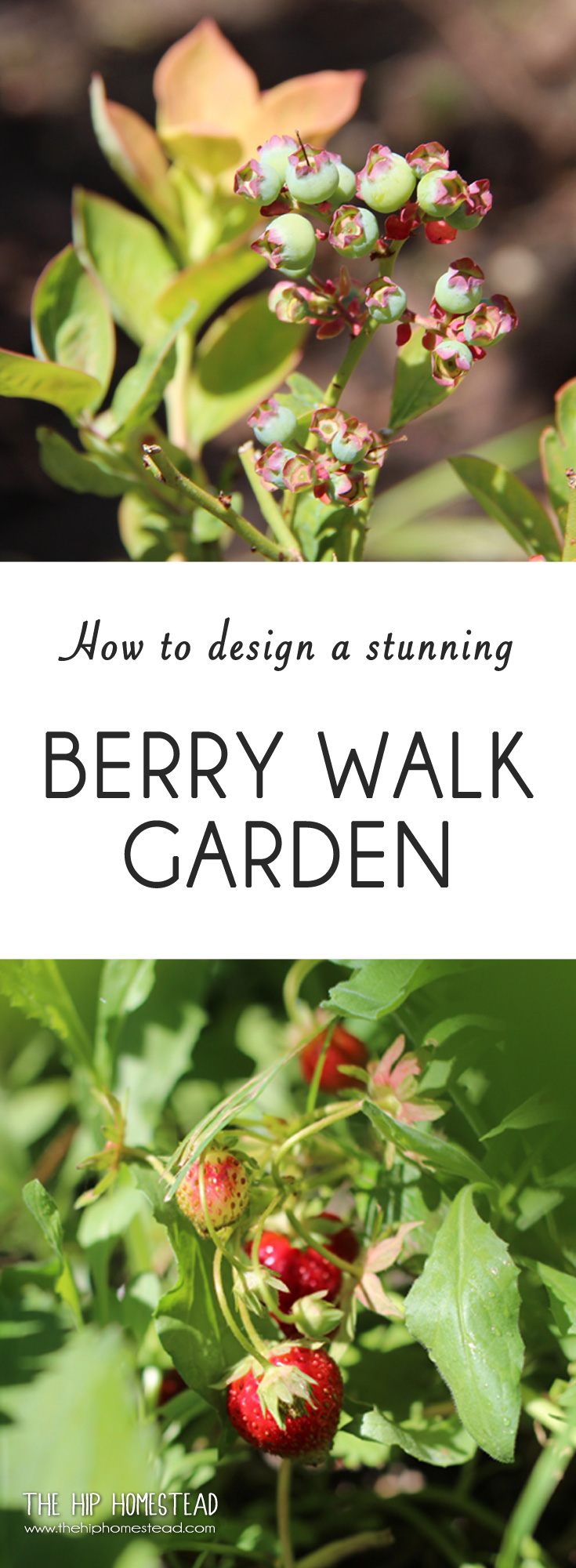 How to Design and Plant a Stunning Berry Walk Garden - The Hip Homestead