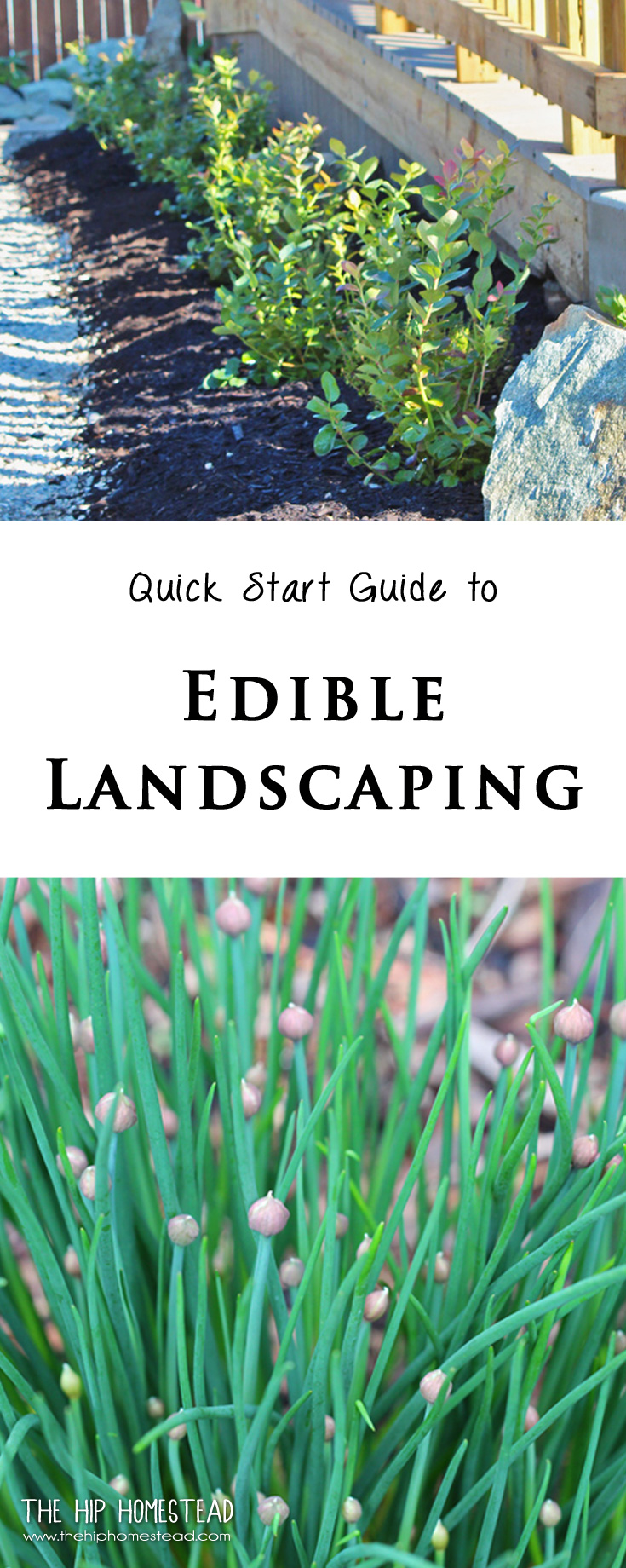 Quick Guide to Edible Landscaping - The Hip Homestead