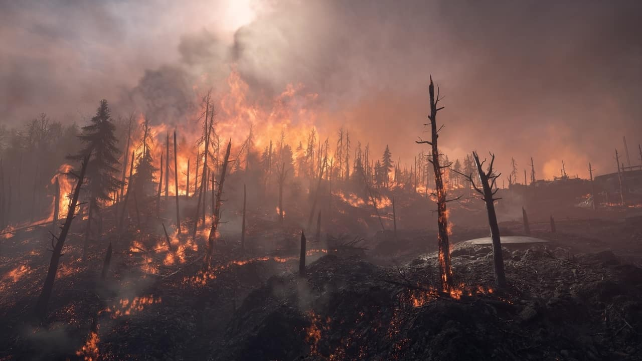 thp-amazon forest fire cover