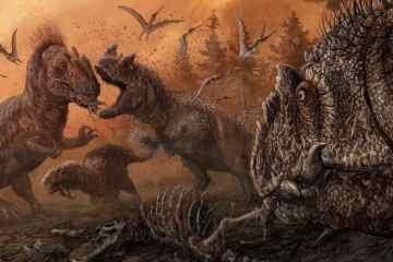 thp-allosaurus cover