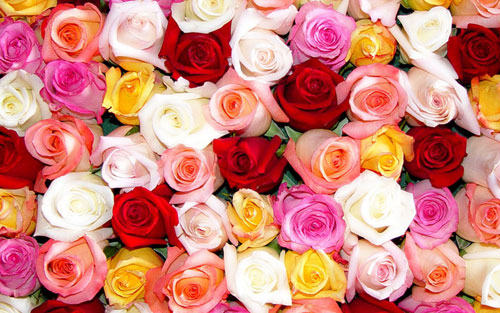 Image result for different color roses