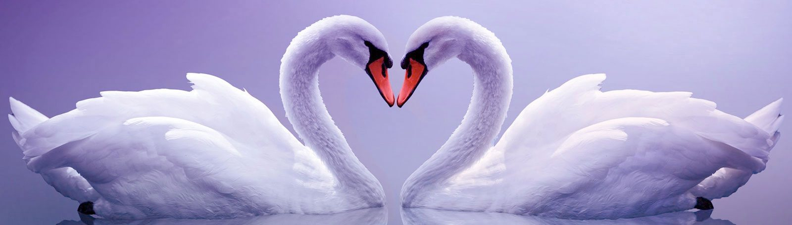Image result for valentine's day pictures