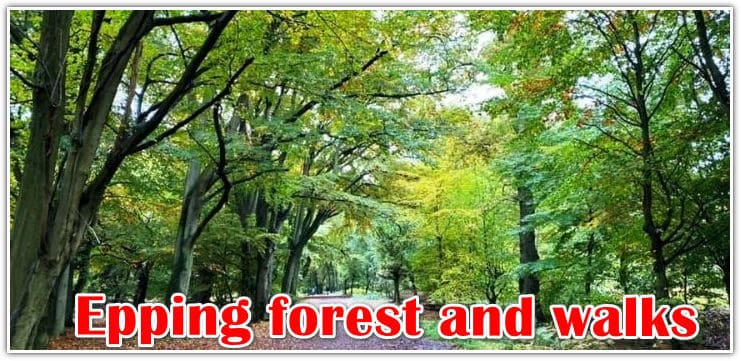 All about Epping forest and 9 walks