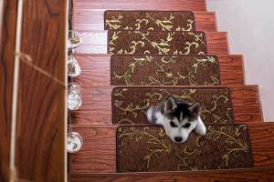 Seloom Non Slip Stair Treads - best carpet for stairs and pets