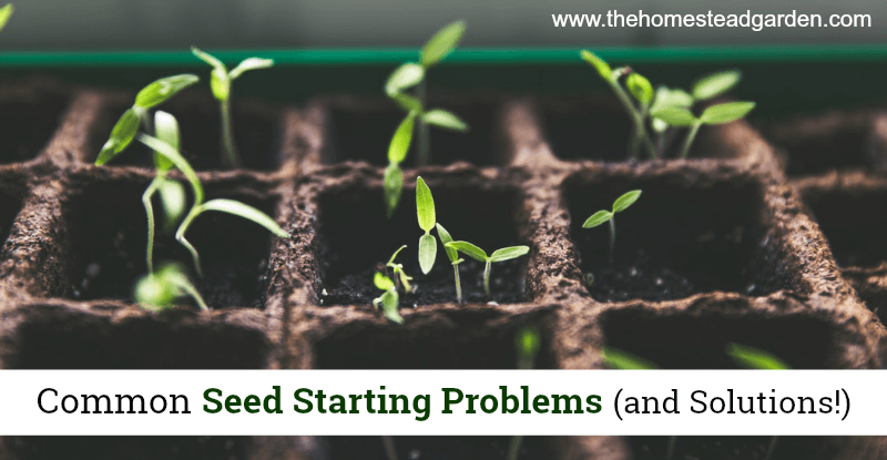 Common Seed Starting Problems (and Solutions!)