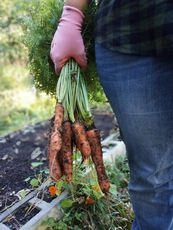 The Benefits of Gardening: Cris and Carrots