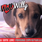 """Get Well, Willy!"" A benefit for Willy the Weenie Dog by The Homicidal Homemaker"
