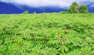 Minister urges Nigeria to invest in agric