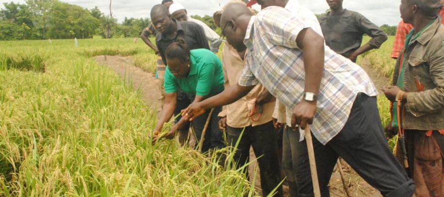 FADAMA farmers attribute bumper harvest to training