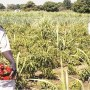 Food security: Farmers tasked on weather