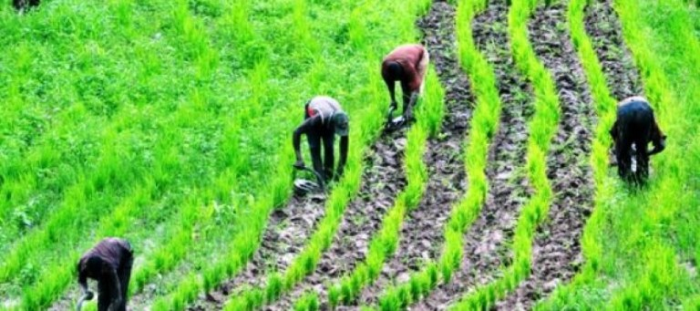 Farming, a profitable venture