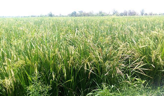 Akeredolu promises quick completion of Rice Mill in Igbara-Oke
