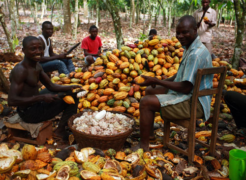 Visit cocoa farmers regularly, govt urged
