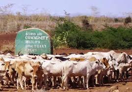 Fund livestock farming, expert tasks govt