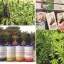 Cannabis: From bad to good
