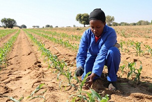 Ekiti introduces agric and entrepreneur in schools