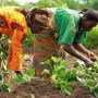 Farmers call for govt assistance