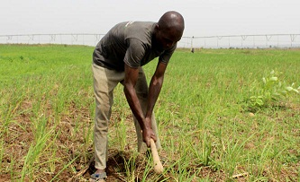 'Acquire requisite knowledge before investing in agric'