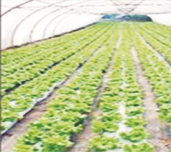 'Youths not interested in farming'
