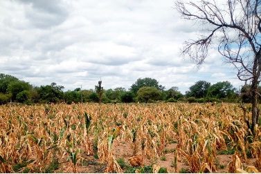 'Massive investment in agric will end food shortage'