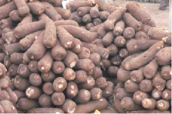Akure North  gets yam  market soon