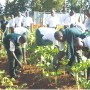 Why schools should start farms