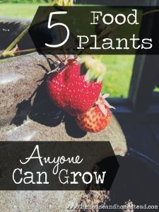 5 Food Plants that are Super Easy to Grow