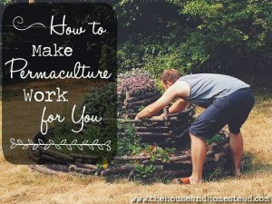 The Principles of Permaculture: How to Make Permaculture Work For You