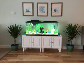 adding an aquarium to our living room - the house house