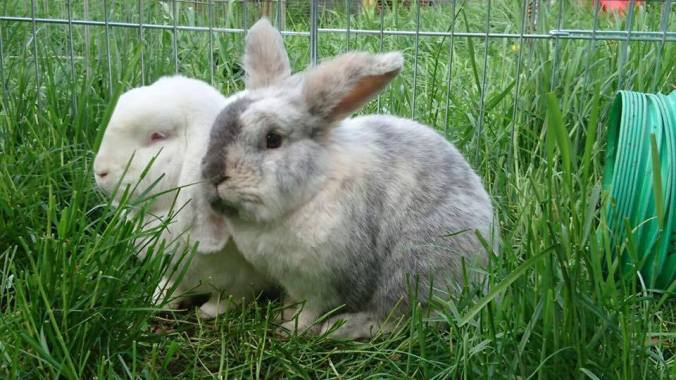 10-things-you-need-to-know-before-owning-rabbits