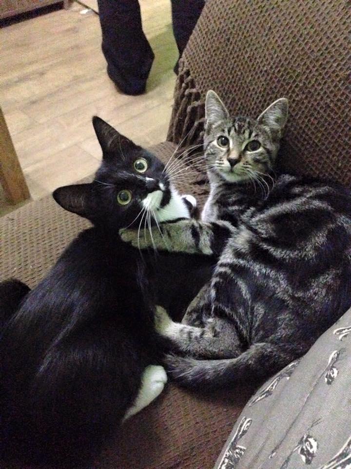 cats-cuddling