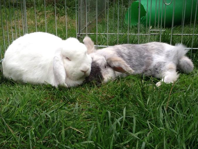 10 Things You Need To Know Before Owning A Rabbit – The House of Animals
