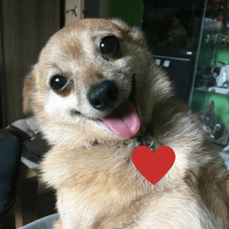 Love Nacho