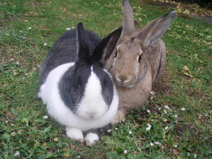 dont-buy-rabbits-for-easter