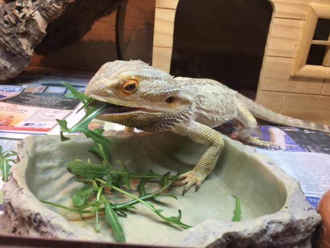 pets-eat-a-lot