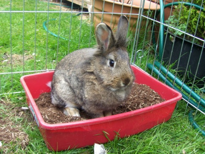 dangers-in-the-garden-for-rabbits