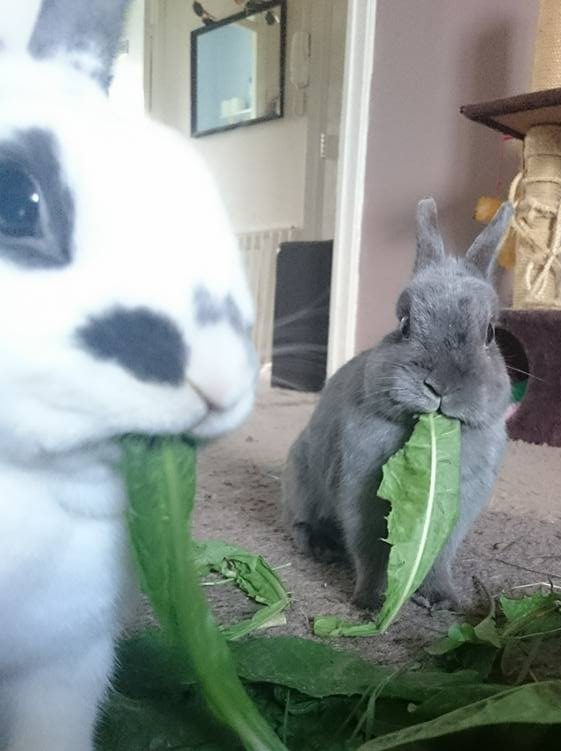 what-can-I-feed-my-rabbits
