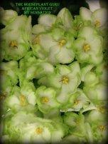 My Sensation flowers