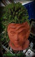 Head vase with Euphorbia