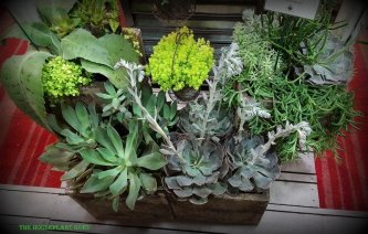 A collection of succulents