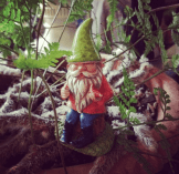 One of the many gnomes in my houseplants