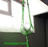 Macrame hanger with a tillandsia in my sewing area in the basement